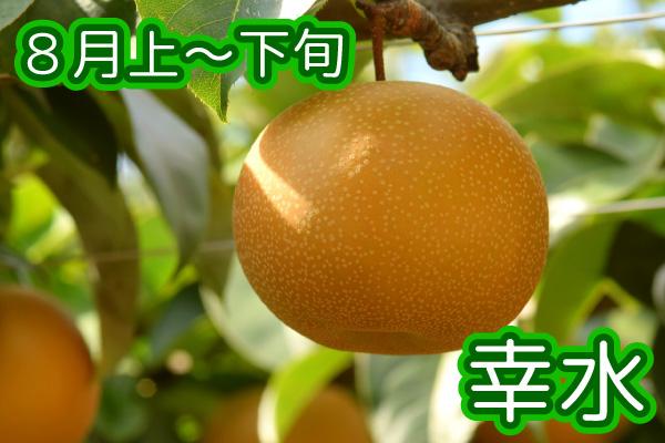 nashi_001