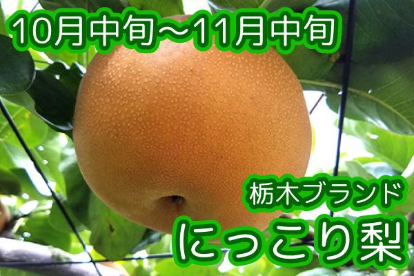 nashi_005