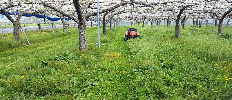 草生栽培による園地管理
