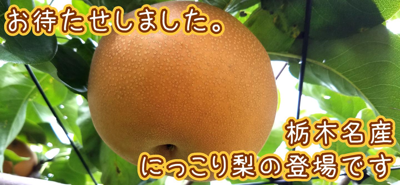 栃木のブランド梨、にっこり登場